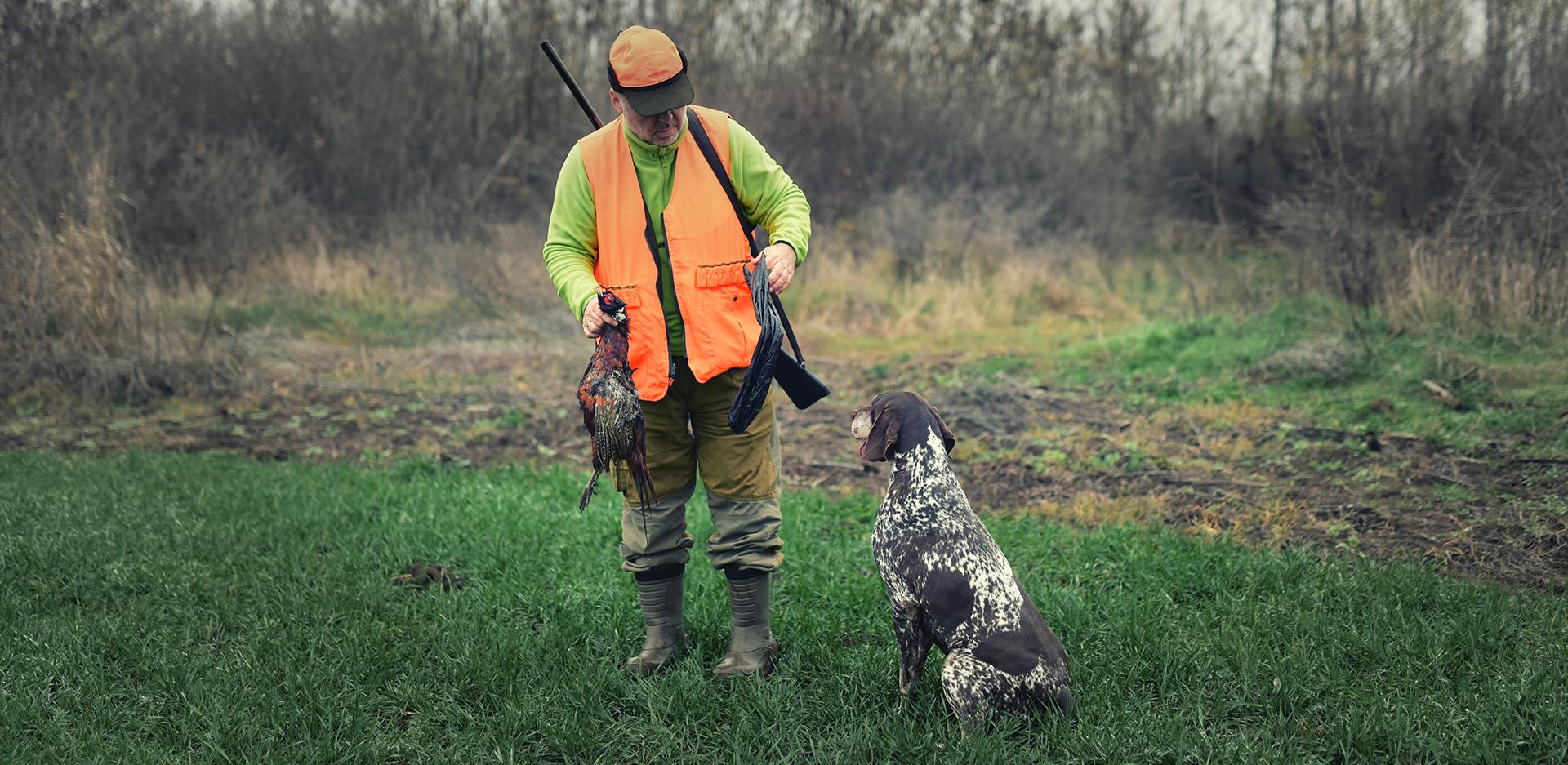 Hunting dog collars, GPS dog collars, vest | Spyboar